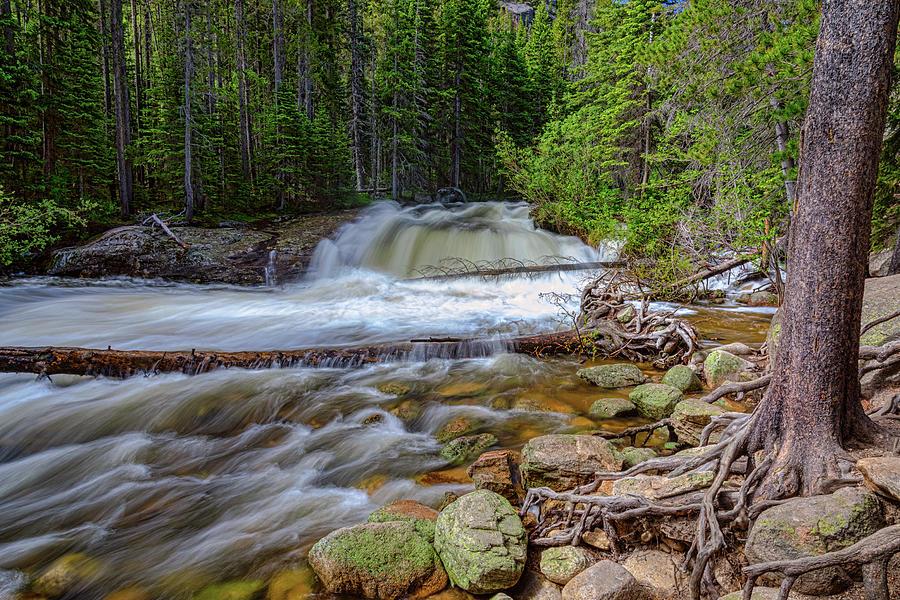 Romantic Forest Stream Photograph