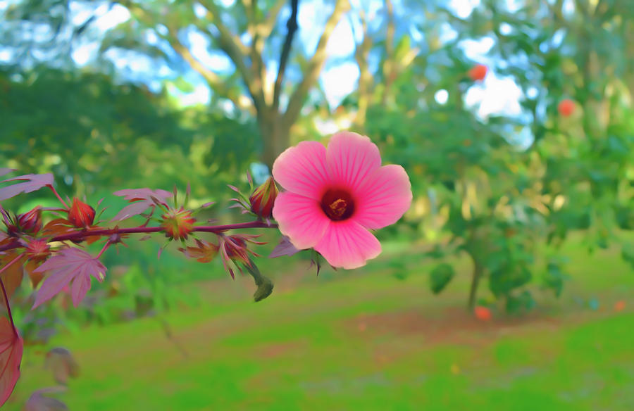 Romantic Skies Red Leaf Hibiscus Flower Photograph By Aimee L