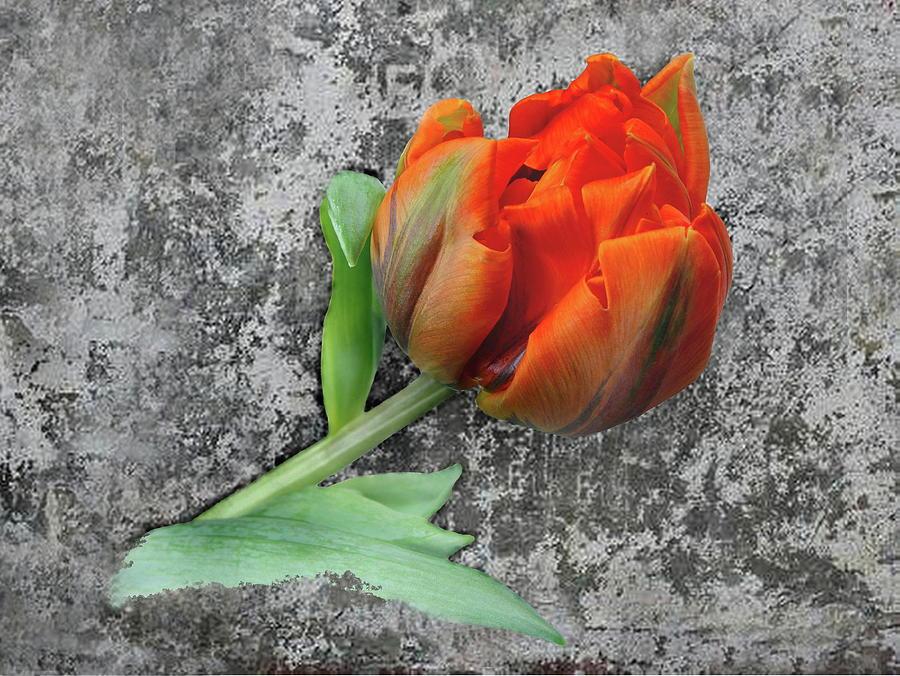 Romantic Photograph - Romantic Tulip by Manfred Lutzius