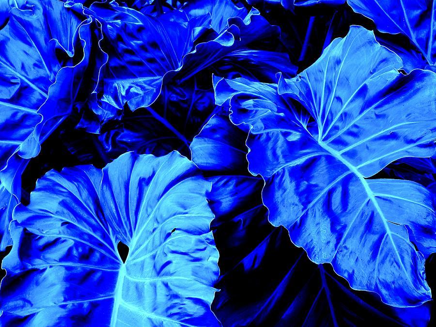 Blue Photograph - Romney Blue by Ian  MacDonald