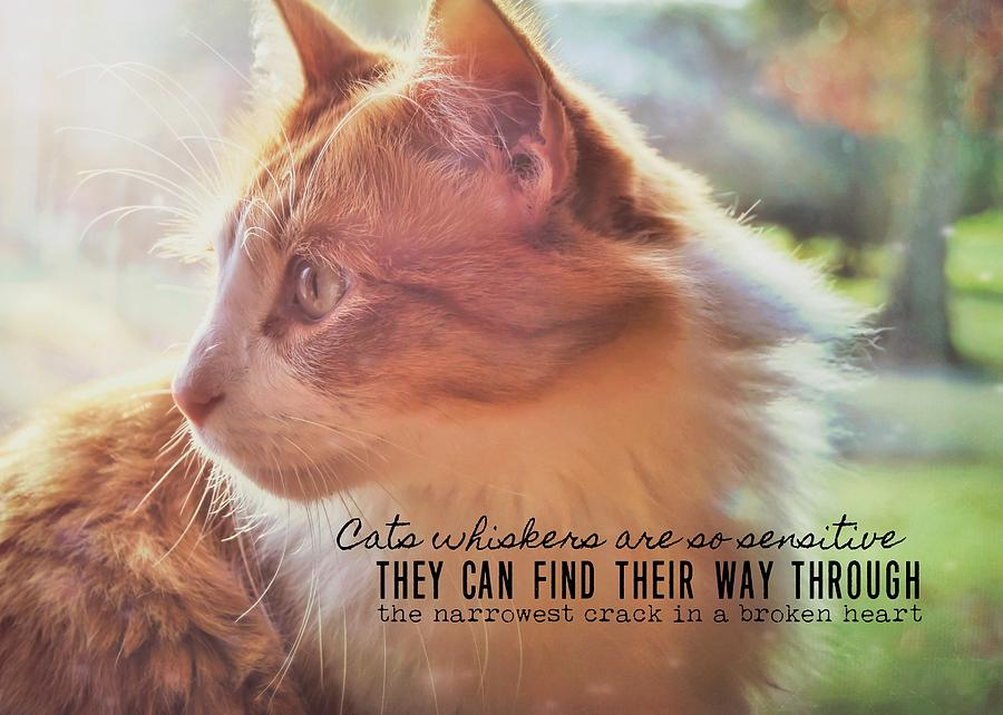 Cat Photograph - Ronald Quote by JAMART Photography