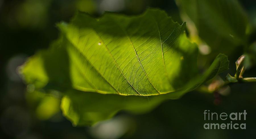 Nature Photograph - Rontgen by Lyudmila Prokopenko