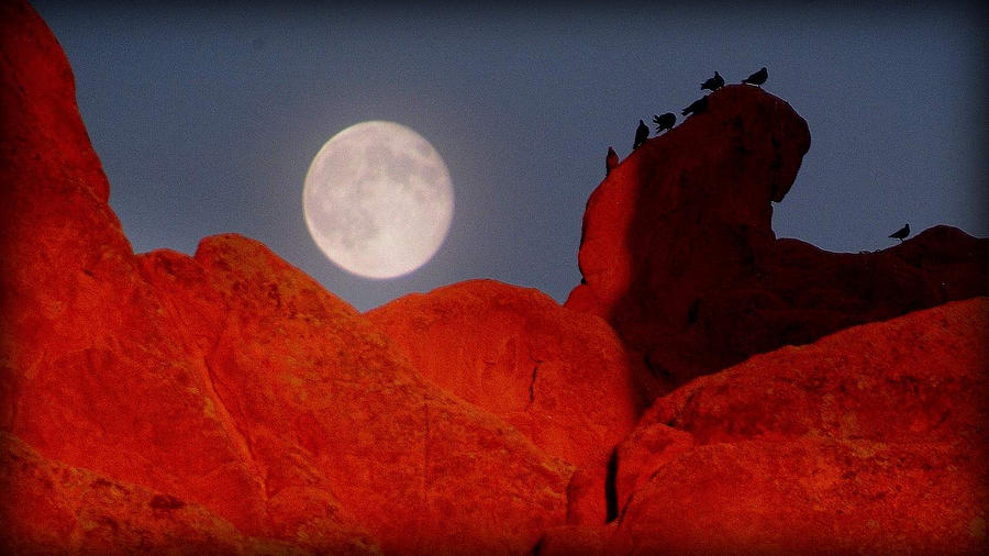 Moon Bird Photograph - Room With A View.. by Al  Swasey