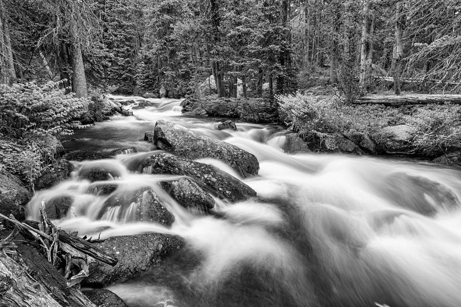 Roosevelt National Forest Stream In Black And White Photograph