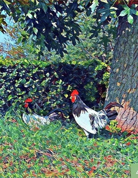 Roosters by Dina Calvarese