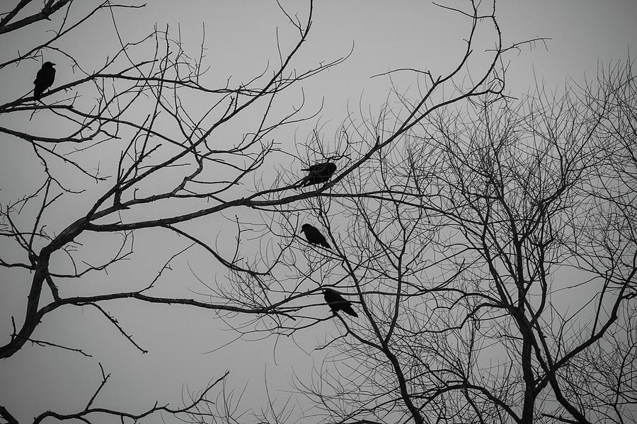 Roosting Birds On Tree Silhouette Photograph