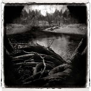 Holga Photograph - Root Of Origins by Lauren Kaplan