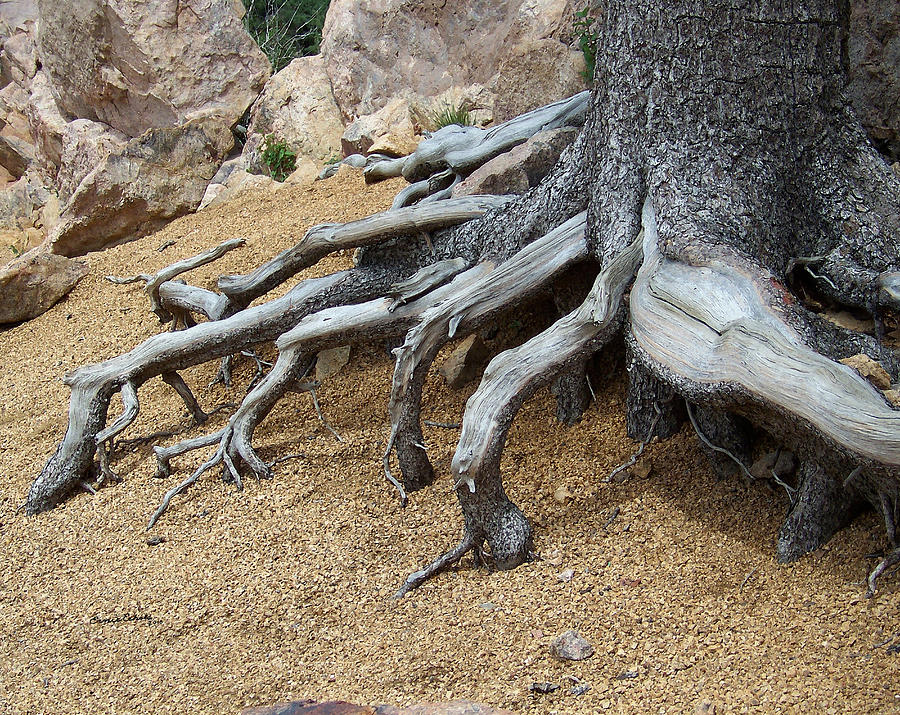 Roots Digital Art - Roots by Ernie Echols