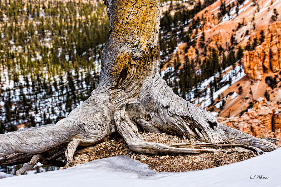 Landscape Photograph - Roots Gripping The Edge by Christopher Holmes