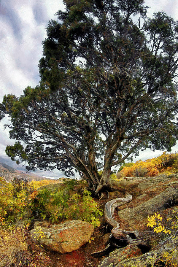 Roots Of The Black Canyon Colorado Bonsai Tree Photograph By Jason Politte