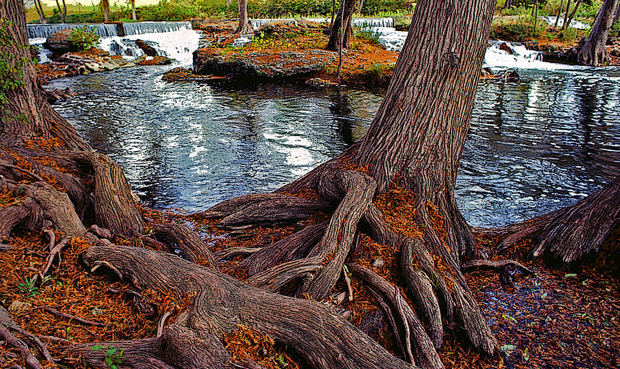 Roots Painting - Roots On The River by Stephen Anderson