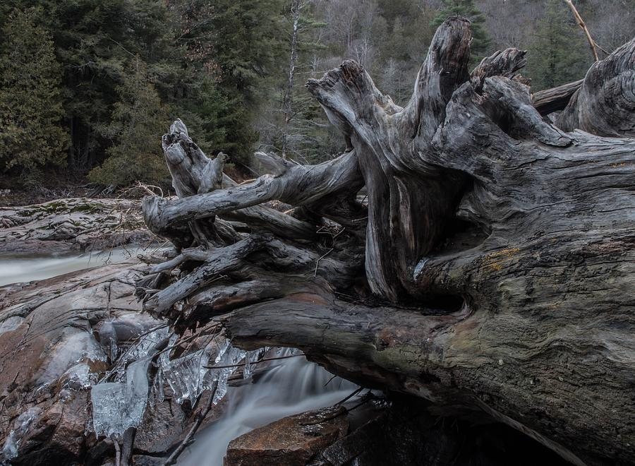 Roots Photograph - Roots by Tim Beebe