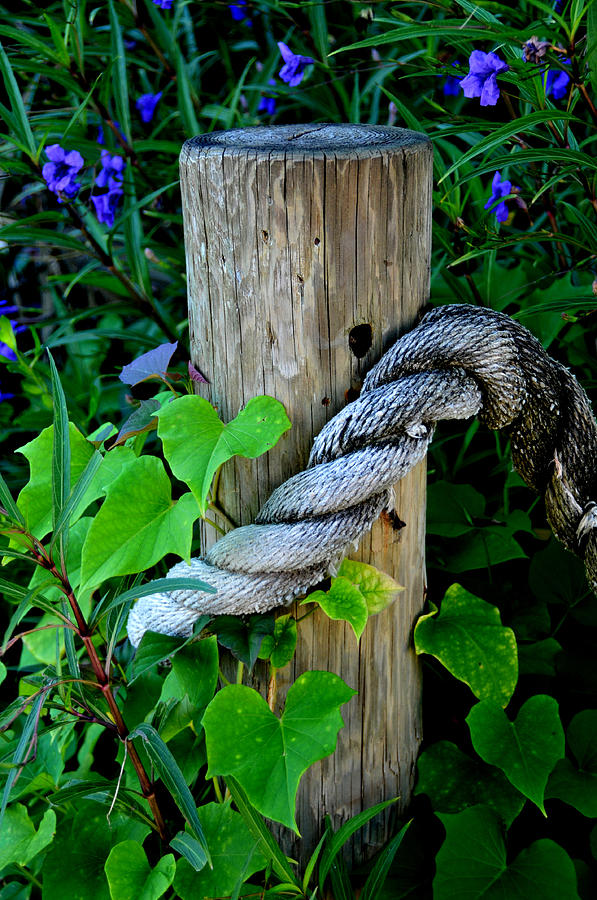 Rope Photograph - Rope And Vine by Lyle  Huisken