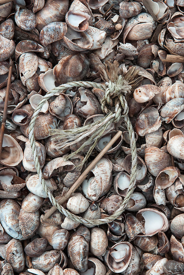 Hammonasset Photograph - Rope In Shells by Clifford Pugliese
