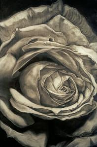 Drawing Drawing - Rosa Blanca Or White Rose by Alberto Martorana