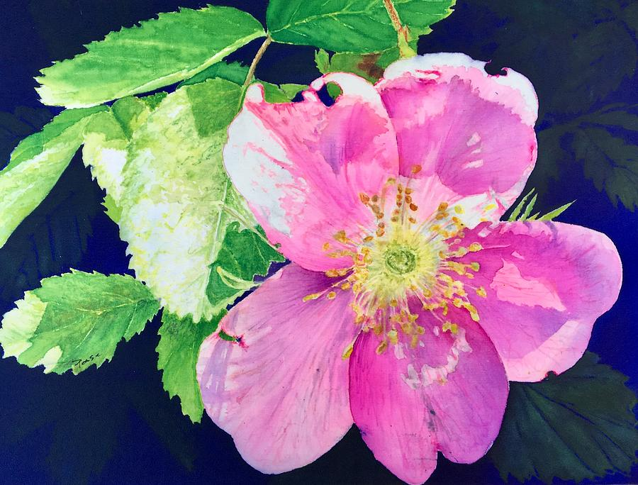Rosa Californica by Barbara Pease