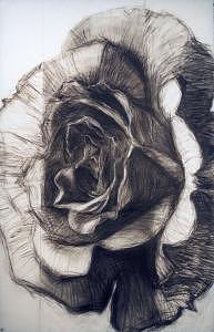 Rose Drawing - Rosa Furiosa Or Furious Rose by Alberto Martorana