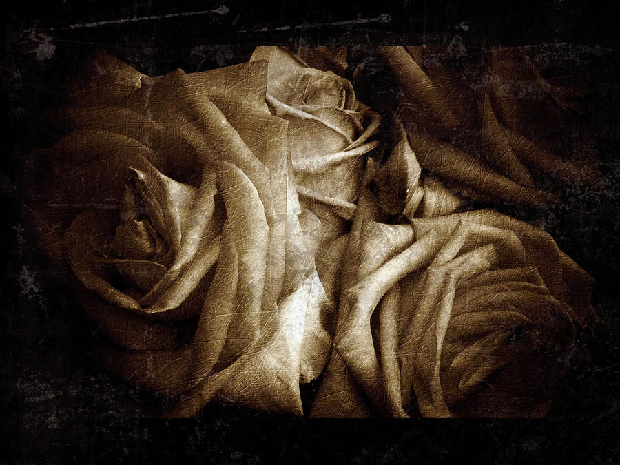 Rose 11 by D A Metrov