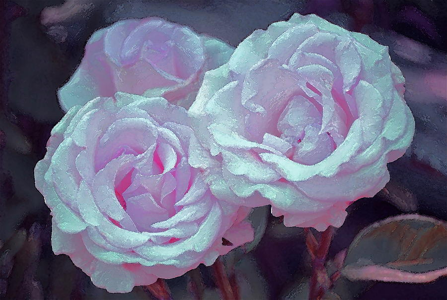 Floral Photograph - Rose 118 by Pamela Cooper