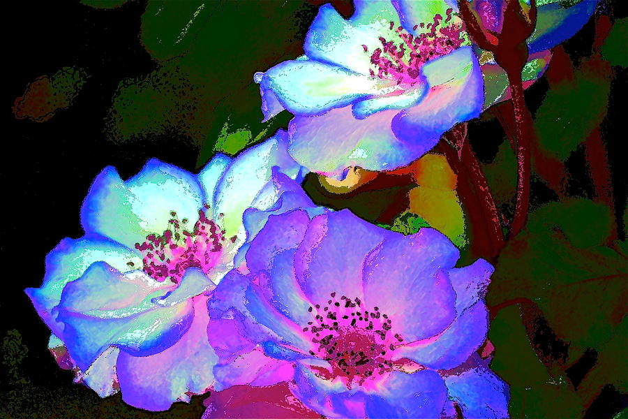 Floral Photograph - Rose 127 by Pamela Cooper