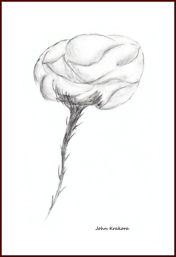 Rose 3 Drawing