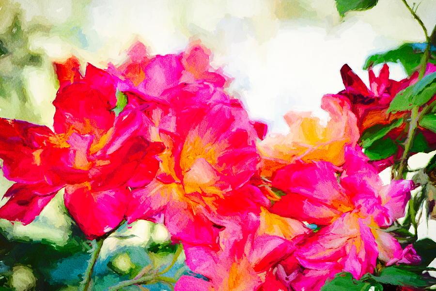 Rose 389 by Pamela Cooper