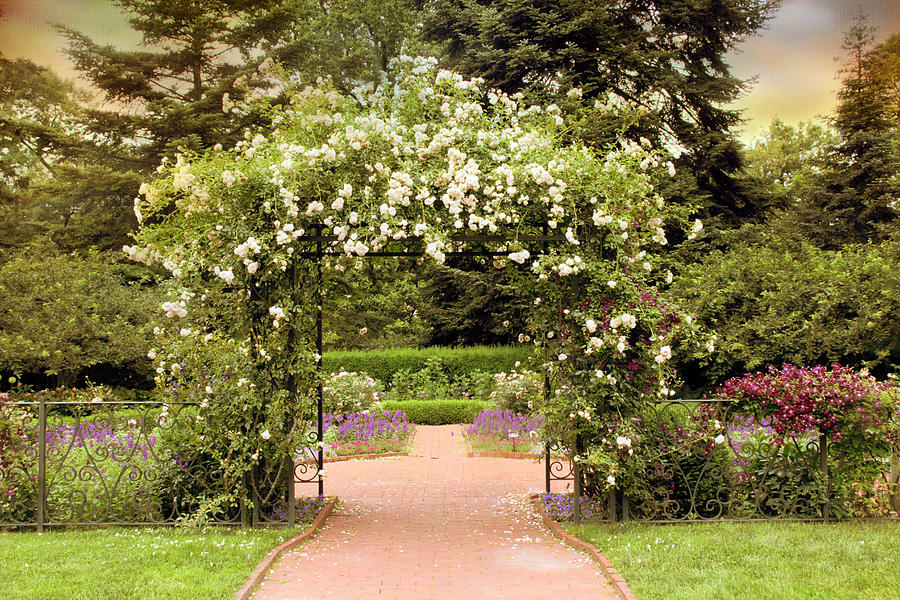 Garden Photograph - Rose Arbor by Jessica Jenney