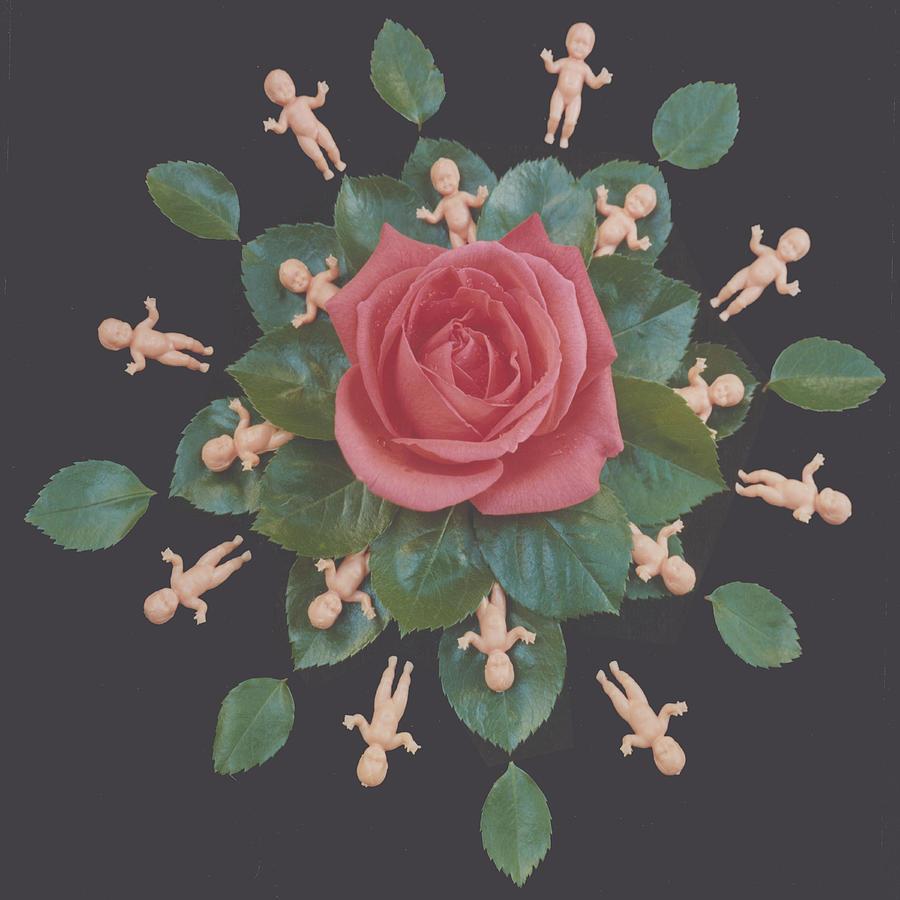Rose Photograph - Rose Babies I by Dennis Kendal Hall