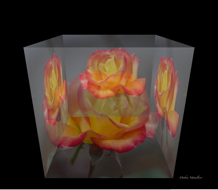 Rose Block Photograph