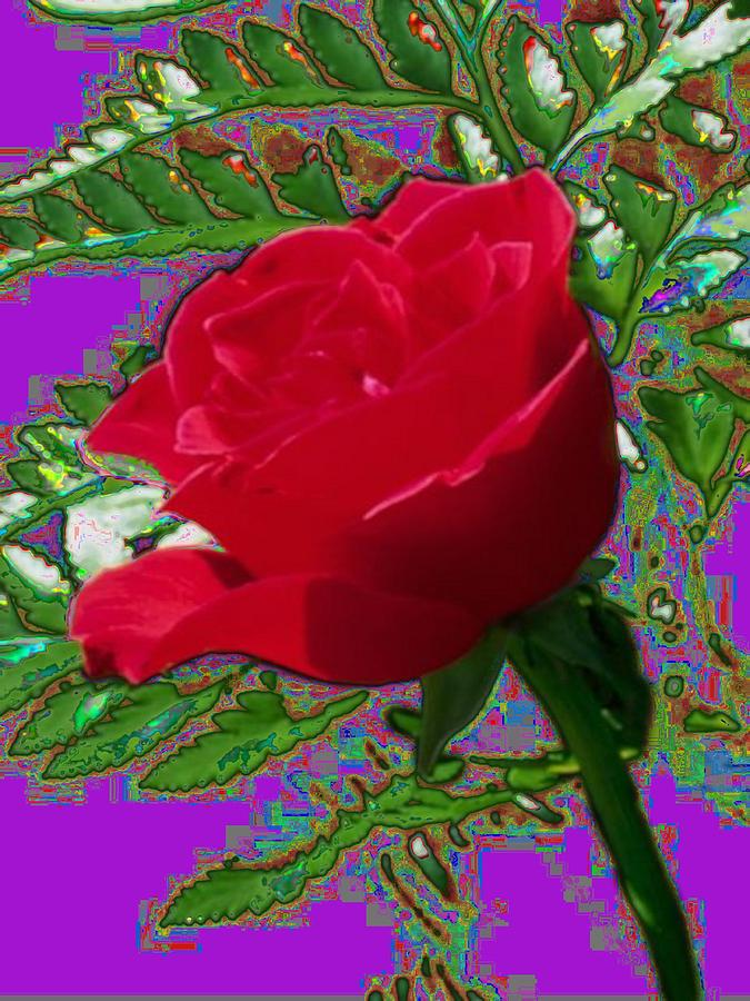 Rose Photograph - Rose For You by Tim Allen