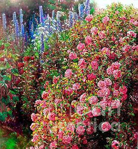 Flower Painting - Rose Garden 2 by Bo Li