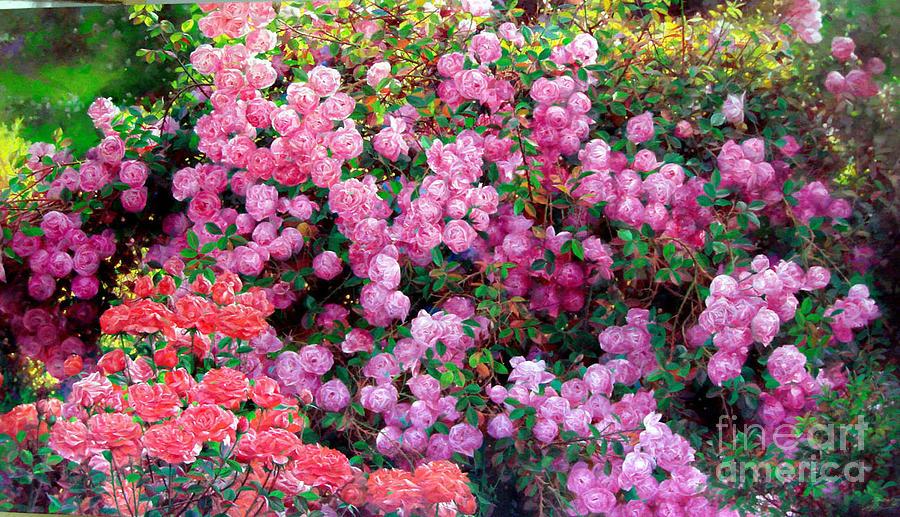 Garden Painting - Rose Garden 9 by Bo Li