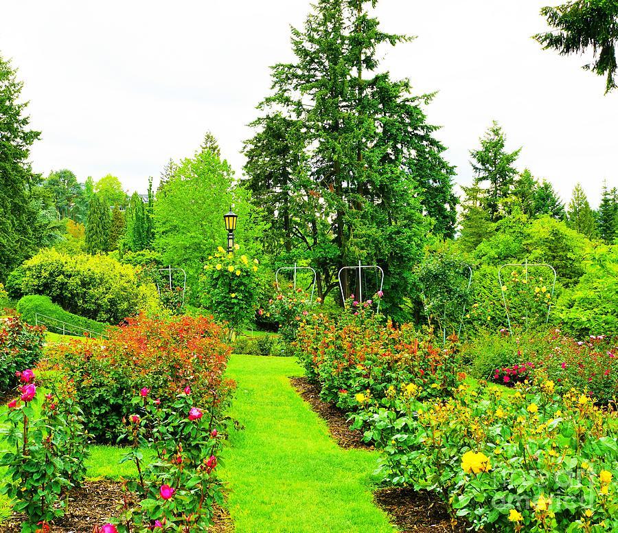 Rose Garden, Portland Oregon Photograph by Merle Grenz
