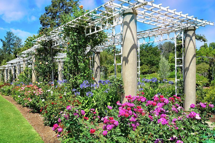 Rose Garden Trellis Photograph By Lynn Bauer