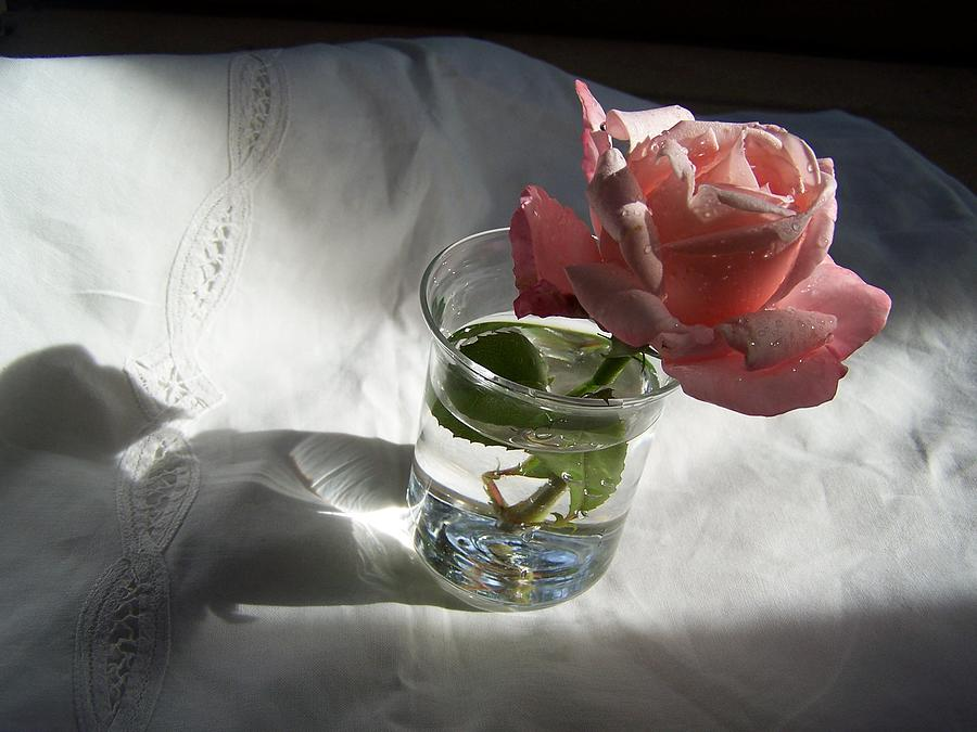 Rose Photograph - Rose by Geraldine Liquidano