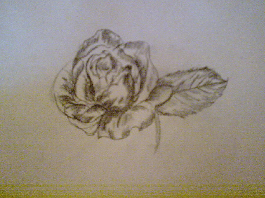 Perfect Rose Drawing - Rose by Helen Vanterpool