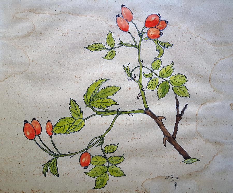 Rose hip by Thomas M Pikolin