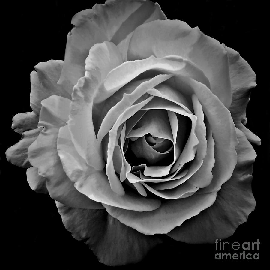 rose patricia strand photograph 26th uploaded june which