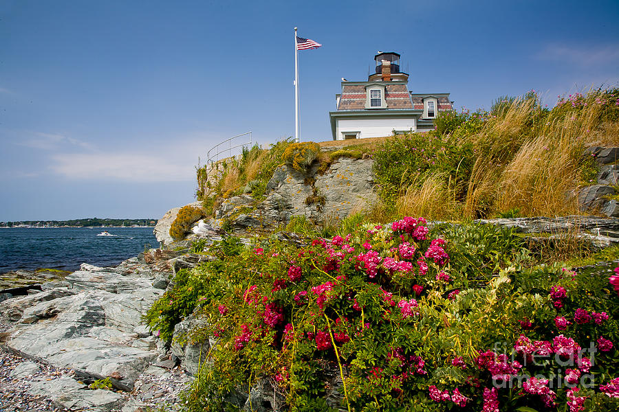 Bay Photograph - Rose Island Roses by Susan Cole Kelly