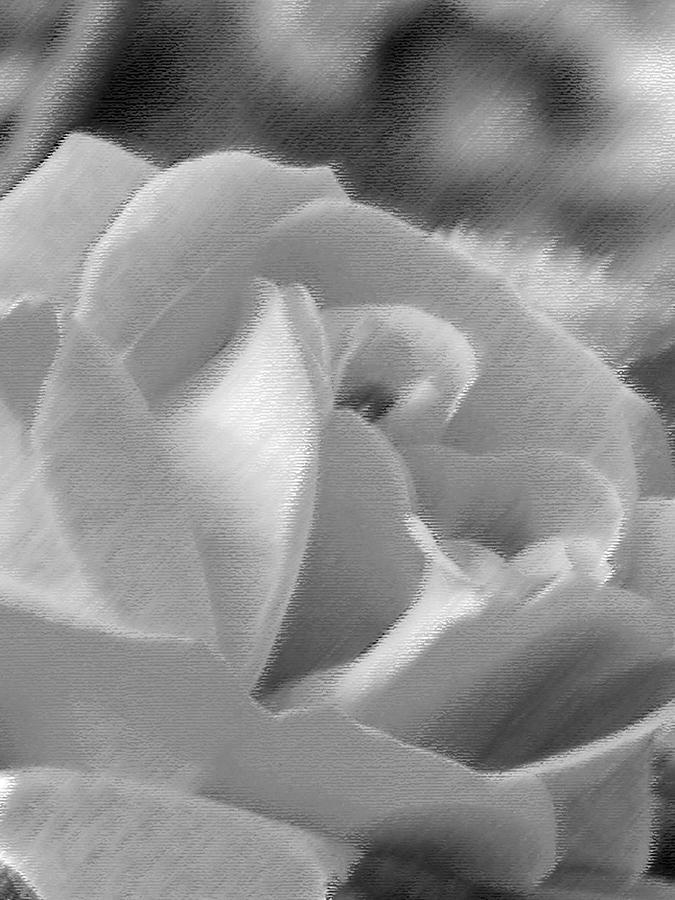Flower Photograph - Rose by John Bradburn