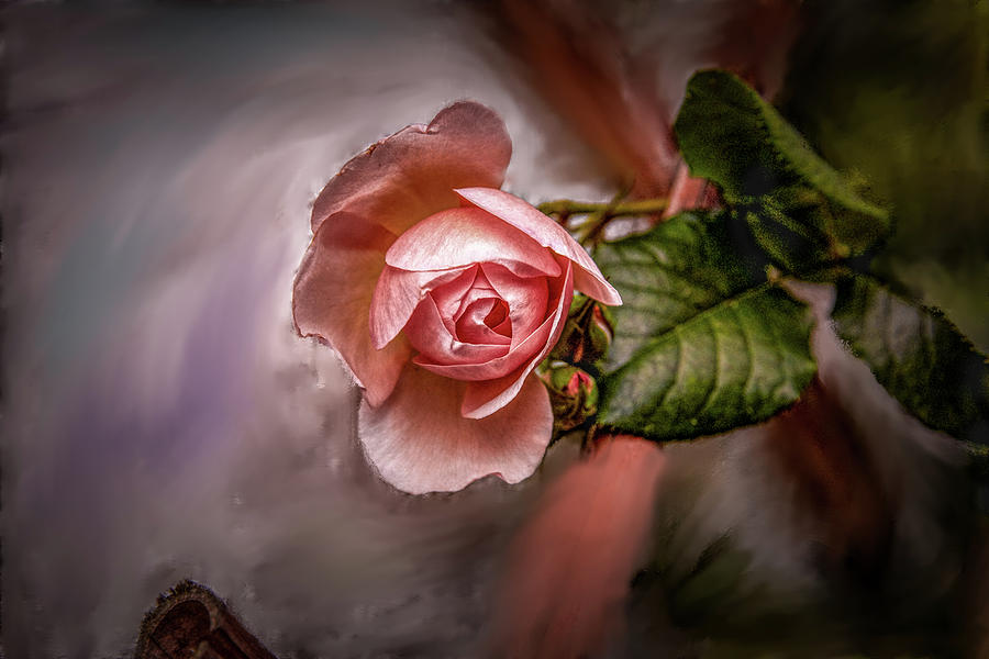 Rose Mixed Media - Rose On Paint #g5 by Leif Sohlman
