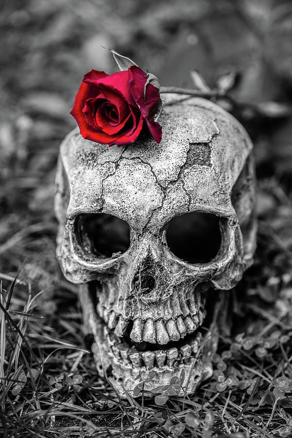 Картинки с черепами и розами, гифки февраля
