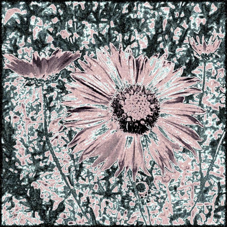 Daisies Digital Art - Rose Wine Daisies by Will Borden