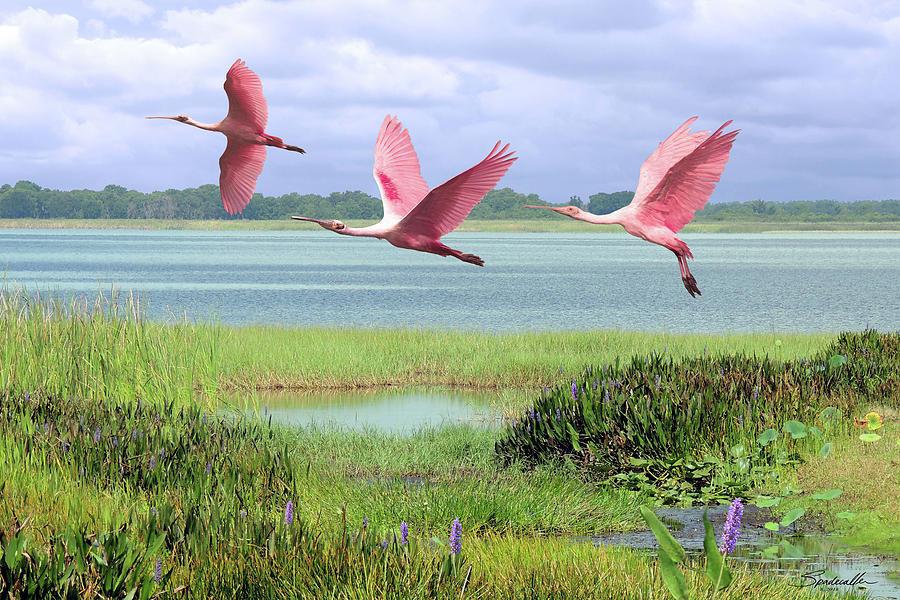 Birds Digital Art - Roseate Spoonbills Of Florida Bay by M Spadecaller