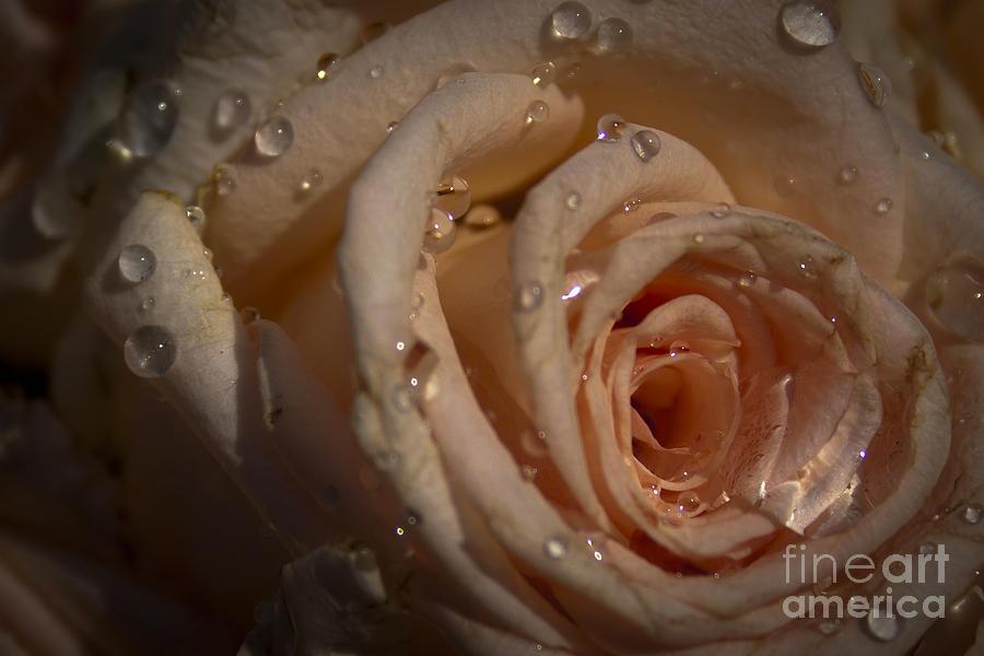 Rose Photograph - Rosebud by Marta Grabska