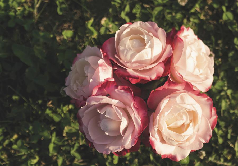 Roses Photograph - Roses In A Vase,on The Grass by Smiljana Jovanovic