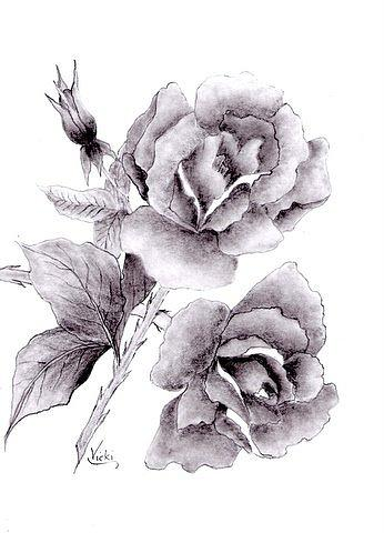 Roses In Full Bloom Drawing by Vicki Thompson