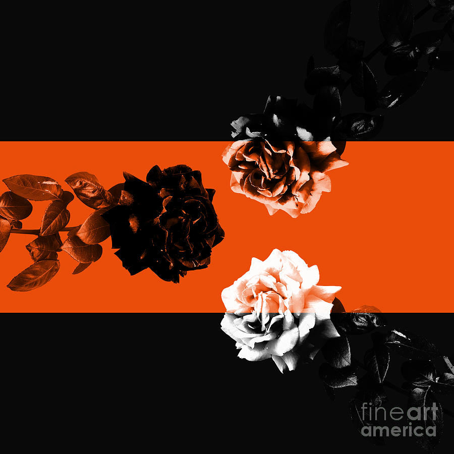 Floral Photograph - Roses Interact With Orange by Cesar Padilla