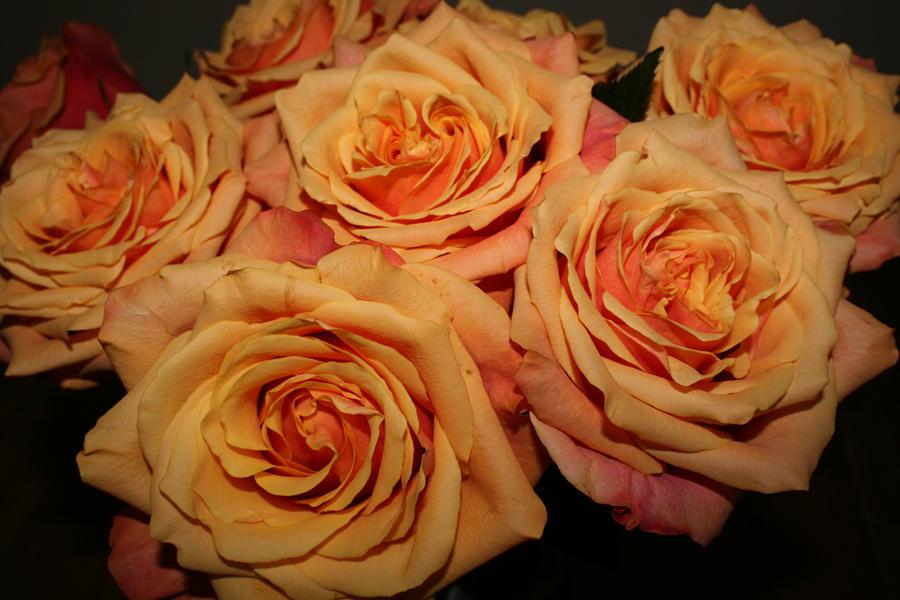 Rose Photograph - Roses by Linda Hardin