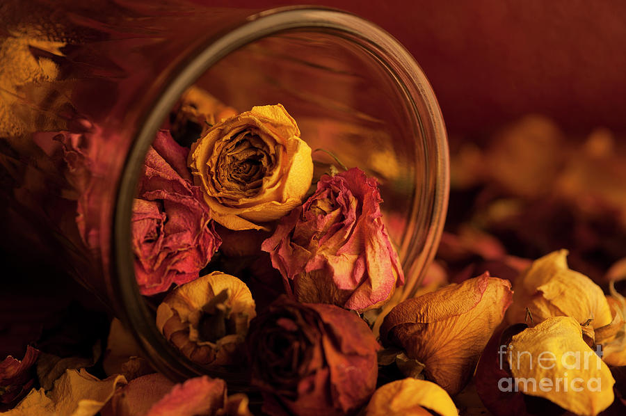 Abundance Photograph - Roses Spilling Out Of Vase by Jim Corwin